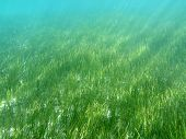 Sea Grass in Florida's Gulf of Mexico.