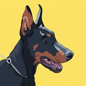 stock photo of doberman pinscher  - Close - JPG