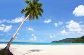 Coconut palm tree on sunny beach
