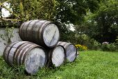 Old Stacked Beer Barrels
