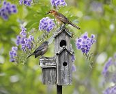 Female Black Bird And A Baby Bird Perching On A Bird House