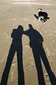 a dog walks on the beach and the Sun casts long shadows on the sand