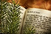 stock photo of bible verses  - Bible open to Christmass passage with evergreen sprigs - JPG