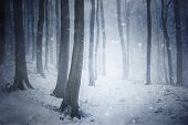 Snow storm in a forest with fog and snow