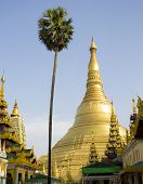 Shwedagon Pagoda with Palm in Rangoon, Myanmar