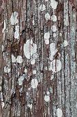 thuja tree surface