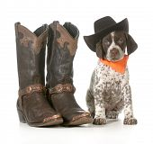 country dog - german shorthaired pointer wearing western hat sitting beside western boots isolated o