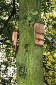 Bat boxes on tree.