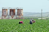 Migrant Farmworkers In California