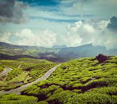 Vintage retro hipster style travel image of Kerala India travel background - road in green tea plant
