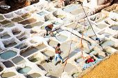 Traditional leather tannery in fez