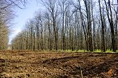 Tree Planting Field In The Forest