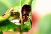 The Earwig In The Leaf