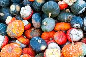 Colorful Miniature Pumpkins