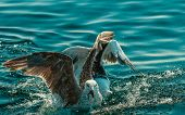 foto of flock seagulls  - Animals nature and action - JPG