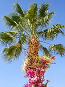 Nature-scenery with palmtrees and flowers on blue sky