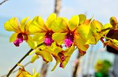 stock photo of orquidea  - Beautiful orchid on the blue sky background - JPG
