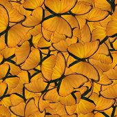 seamless background from gold morpho butterflies