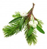 Mistletoe twig and fir tree branch christmas decoration over white background.
