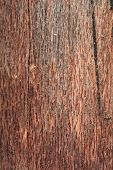 Wood background texture close up
