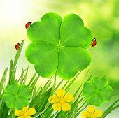 clover leaf and ladybugs