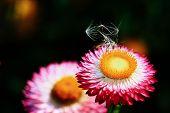 Bright summer flower