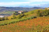 Autumnal vineyards on the hills of Langhe in Piedmont, Northern Italy.