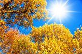 Foliage Beams Yellow Trees