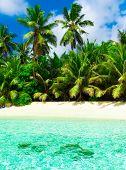 Park Coconut Summer