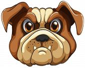 Illustration of a close up bulldog