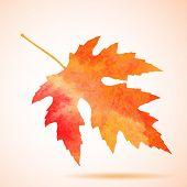 Vector illustration of Orange watercolor maple leaf