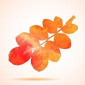 Illustration of an Orange watercolor dog-rose leaf