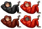 Illustration of a set of orangutans
