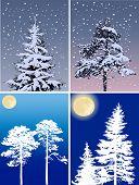 illustration with firs under snow on dark background