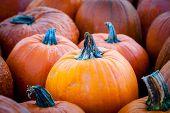 Focus On A Pumpkin On Pumpkin Patch