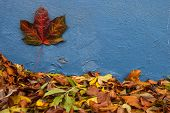 autumn leaves on blue wall background