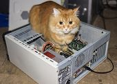 Picture of cat inside the computer.