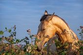 pic of horses eating  - Beautiful light horse in a field eating grass - JPG