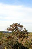 stock photo of sea-buckthorn  - Wild sea buckthorn bush growing in a field - JPG