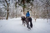 stock photo of horse-riders  - Two riders on the horses at beautiful winter snowy forest - JPG