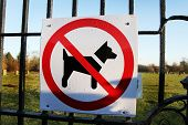 foto of herding dog  - No dogs allowed under any condition - JPG