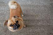 Wide-Eyed Dog