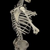 picture of skeleton  - Human skeleton isolated on black background  - JPG