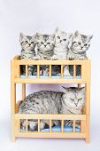 pic of bunk-bed  - Mother cat with four youngs in bunk bed - JPG