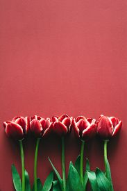 stock photo of marsala  - Five marsala colored tulips on marsala paper - JPG
