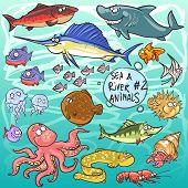 pic of sea life  - Sea and river animals  - JPG