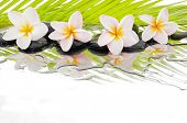 stock photo of frangipani  - Set of palm with wet zen stones and Frangipani  - JPG