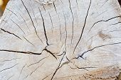picture of cross-section  - Cross section brown of tree trunk texture - JPG