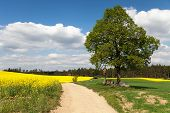 pic of crucifix  - View of way between rapeseed field and lime tree with crucifix and beautiful clouds  - JPG