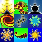 pic of mandelbrot  - Set of fractal floral pattern textures or backgrounds - JPG